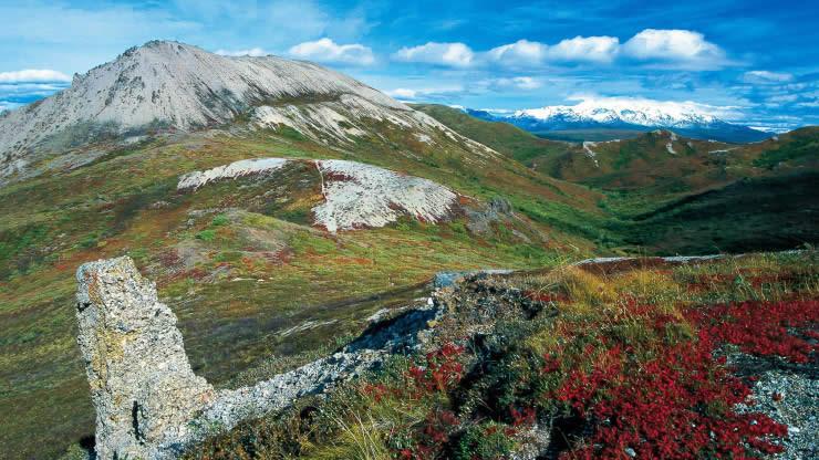 Aljaska medved