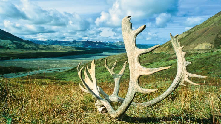 Aljaska Safari severu