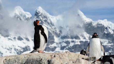Antarktida-11