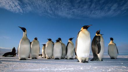Antarktida_Emperor-