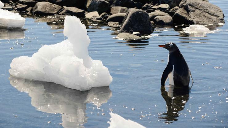 Antarktida sezóny
