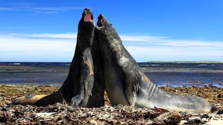 Falklandy-8